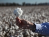 cotton-carroll_107x