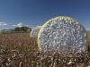 cotton-harvest_125x