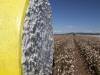 cotton-harvest_141x