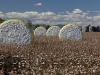 cotton-harvest_154x