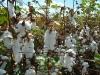 cotton03