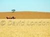 harvest Kadina96