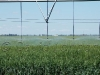 irrigation-pivot23