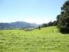 pasture-384