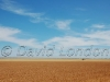 wheat-Kadina11