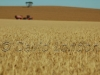 wheat Koolunga00