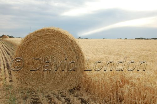 wheat-cloud-bale01