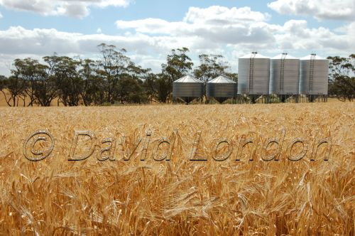wheat-silos61