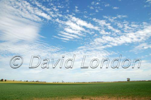 wheat-sky15