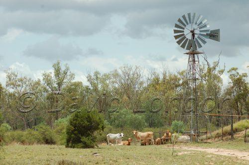brahman windmill67