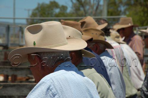 cattlesale-punters03