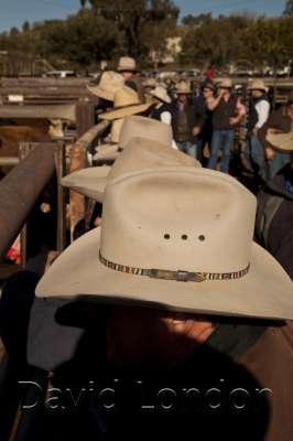 cattlesaleyard-hats_239
