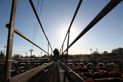 cattlesaleyard222