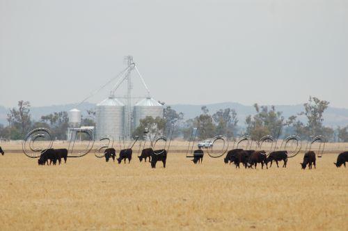cattle silo72