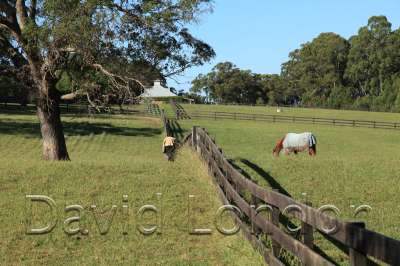 horse-paddock67
