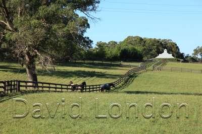 horse-paddock69
