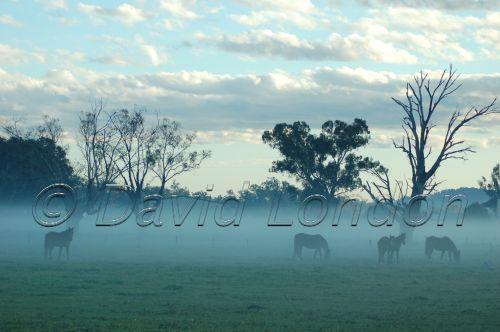 horses mist09