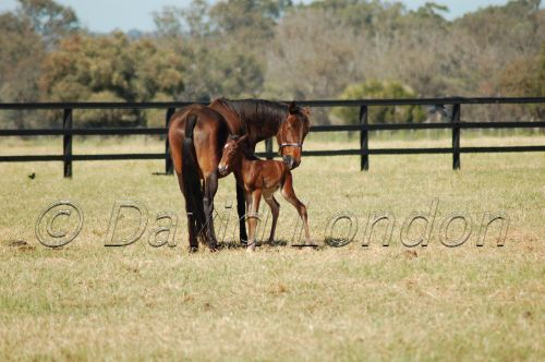 marefoal25