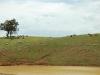 cattle-tree-sky44