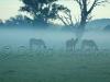 horses mist07