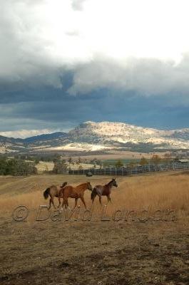 autumnstorm-horses01
