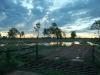 sunset cattle grid45