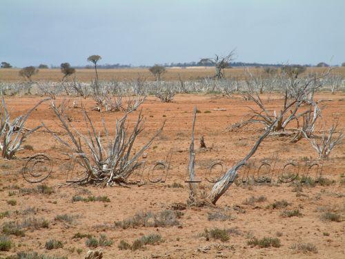 arid-landscape08