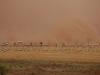 dust-storm204
