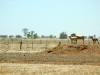 sheep drought93