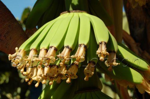 bananas25