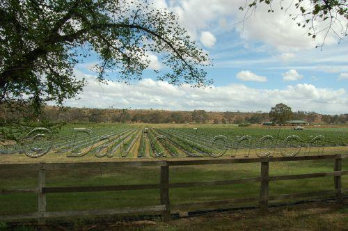 lettuce thru fence