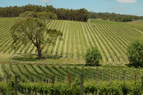 Mclaren vines06