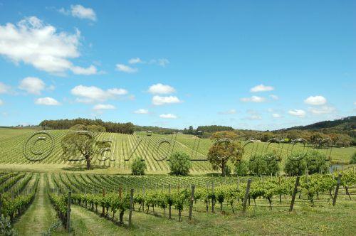 Mclaren vines07