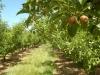 apples92