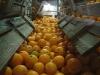 oranges04