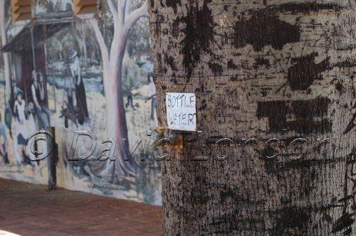 bottle-tree8