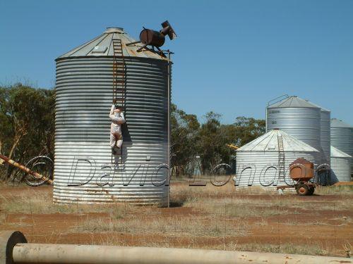 tin horse highway17