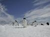 adelies-penguinpoint13