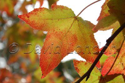 autumn_70