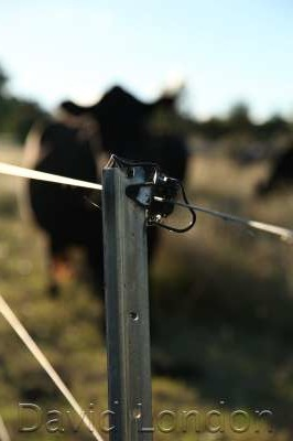 electric-fence-angus31
