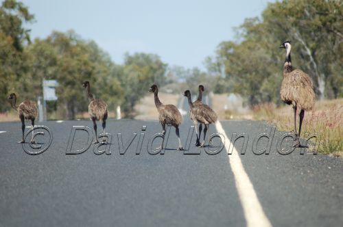 emuchicks5