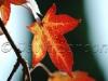 autumn_82