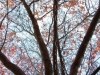 autumn_93