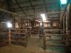 Kingston wool shed44