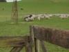 oldfence-windmill_34