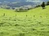 pasture-385