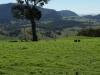 pasture-393