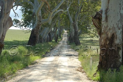 tree lined road03