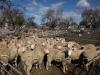sheepsale-winter_393
