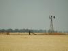 windmill stubble23